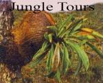 papuan endemic plant