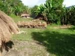 www.trek-papua.com