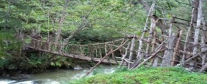 Dani tribe local bridge