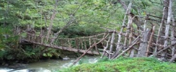 Dani tribe local bridge