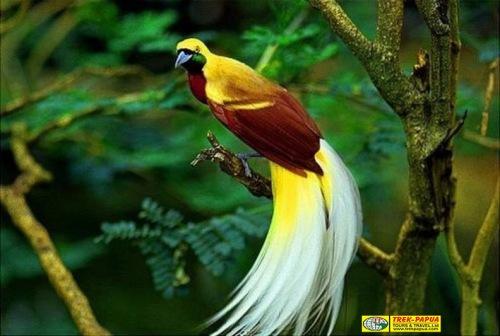 "TREK-PAPUA TOURS & TRAVEL.CO.,LTD Demianus ""Mac"" Wasage, S.S. (Owner & M.D) Office Address: Jl. Gatot Subroto-Yayasan Oikonomos. Oi-Handy Craft, Wamena Papua-Indonesia. Cell phone: +62 81247628708. If you wish to contact me you can either send me an e-mail at: trekpapua@gmail.com,  wasagedemianus@yahoo.com or info@papuatravels.com Skype: wasage3, Facebook name: Papua Travels (Mac) Flexible tour,home based  days tour for domestic & International Market Dear Michael, Total Tour Package: 5D/4N-Raja Ampat Free And Easy program Validity                     : Arrival on ……………..2013) Period Stay : 5 days Raja ampat Total peserta : ………. org/pax  Estimated tour price :  Nett: ($5.900 USD for 2 pax OPTIONS: 1.($1.000 USD for 10-15 pax 2.($990 USD for 15-20 pax 3.($890 USD for 21-25 pax 4.($790 USD for 25-30 pax Group Size                 : Minimal:1-10, 11-15, 16-20, 21-25, 26-30 pax)  Itinerary:  Day-1 (L,D)  On arrival at in Sorong, Anda akan dijemput di JE Meridien Sorong, melanjutkan perjalanan menuju pelabuhan untuk bertolak ke Waiwo Dive Resort di kabupaten Raja Ampat, setelah itu menikmati waktu sore hari sampai malam hari di sekitar cottage, makan malam dan istirahat.  Day-2: (B,L,D) Setelah sarapan pagi hari ini kita akan menuju Kepulauan Wayag tempat yang paling terkenal dan menjadi ""The Icon of Raja Ampat."" Kita akan melalui teluk kabui yang cantik dan indah, yang terdapat tebing – tebing tinggi dan goa, sesampainya di kepulauan wayag kita akan melapor di pos dan menginap di pos Conservasy Internasional (Stay overnight-Dinner all team). Here they will feed ""Wild sharks, Mantas, and many fishes. Here they can swim or snorkeling along wide blue/white sands)-BEAUTIFUL.  Day-3: (B,L,D) Setelah sarapan pagi Kita akan trekking menanjak untuk menuju puncak, dimana kita dapat melihat ""keindahan seluruh Kepulauan Wayag dari atas dan inilah ""the best spot"" untuk yang hobi fotografi"", setelah makan siang berangkat dari kepulauan Wayag, anda akan melihat keindahan pasir putih,"
