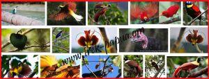 birding-trip