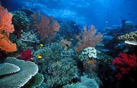 under water, Raja ampat