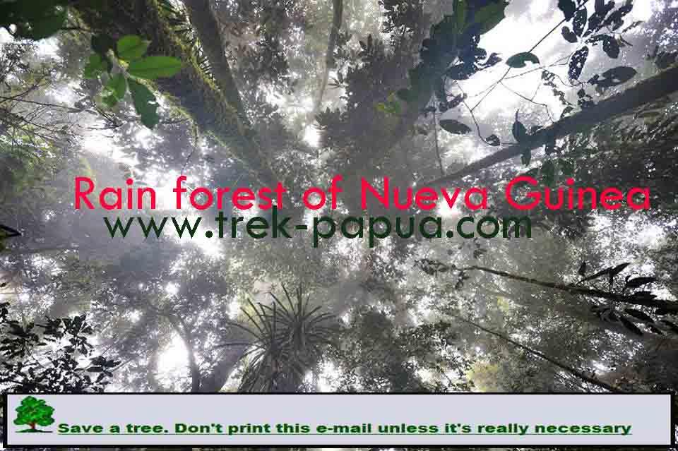 8 Days with Korowai people | Trek Papua
