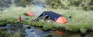 https://trek-papua.com/our-treks/1-week-expereience-carstenzs-mountain/carstensz-adventure/