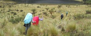 savana to carstenz pyramid. https://trek-papua.com/our-treks/1-week-expereience-carstenzs-mountain/carstensz-adventure/