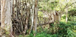 Suku Korowai Dan Kombai, Papua
