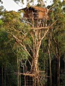 Life up in a Korowai tree house