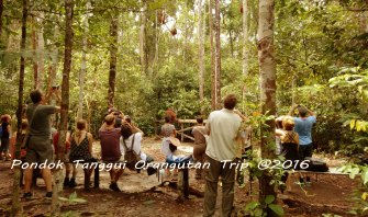 tanggui-orang-utan-trip