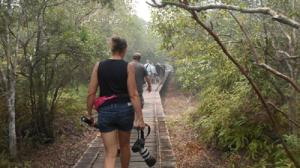 walk-into-orang-utan-spot