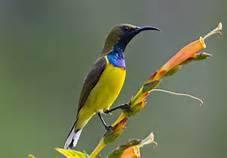 birding-in-wamena