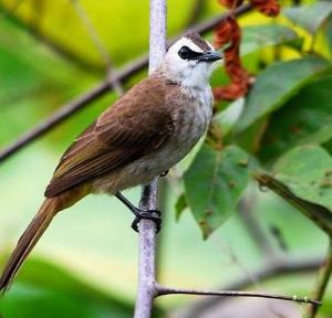 Kei kecil islands birding trip