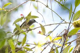 bird-seram