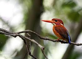 islands-of-seram-birding