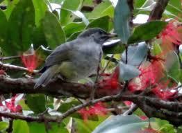 malucas-birding