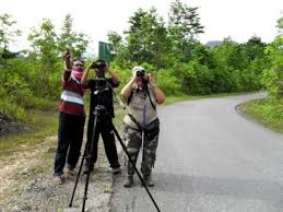 seram-bird-watching