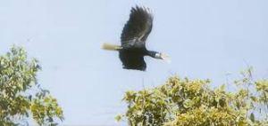 seram-islands-birding