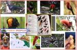 baliem valley treks & Birding(13)