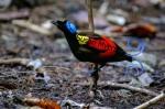 Papua Images (10)