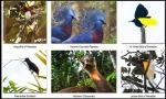 Papua Images (26)
