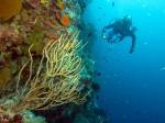 marine-under water life