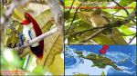 Explore Nimbokrang Birding