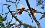 @bird-watching-isio-hills