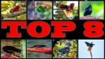 top 8 Birds ofparadise-Papua